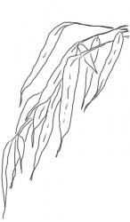Bambusblätter 7