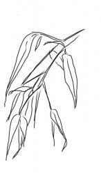 Bambusblätter 1