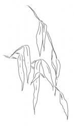 Bambusblätter 5